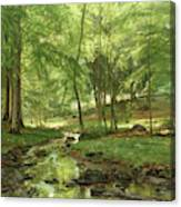 A Woodland Stream Canvas Print