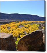 Gorgeous View Of Golden Cottonwood Trees In Canyon Canvas Print