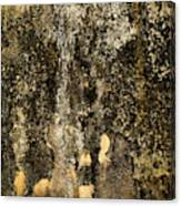 Abstract Scary Ocher Plaster Canvas Print