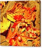 Acorns Fall Maple Oak Leaves Canvas Print