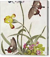 Agapanthus Africanus, Iris Variegata And A Species Of Oxalis Canvas Print