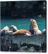 Alaska Steller Sea Lions Canvas Print