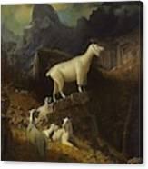 Albert_bierstadt_-_rocky_mountain_goats Canvas Print