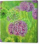 Alium Canvas Print