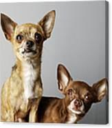 All Dog, No Cat Canvas Print