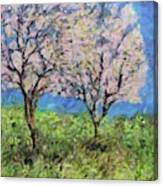 Almonds In Full Bloom Canvas Print