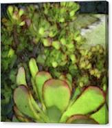 Aloe Succulent Canvas Print