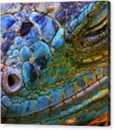Amazing Iguana Specimen Displaying A Canvas Print