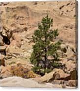 Amazing Life On The Sandstone Cliffs Canvas Print