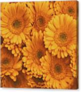 Amber Soaked Canvas Print