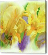 Amenti Yellow Iris Flowers Canvas Print