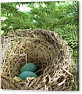 American Robin Nest Canvas Print