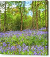 An English Bluebell Wood Canvas Print