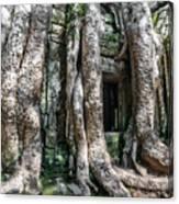 Angkor Roots Canvas Print