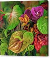 Anthurium Riot Canvas Print