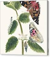 Antique Watercolor Illustration Of Nettle Butterfly In Various Life Stages Published In 1824 By M.p. Canvas Print