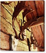 Antler Collection On Wall Canvas Print