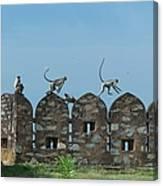 Apes Playing At Kumbhalgarh Canvas Print