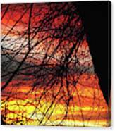 Arizona Sunset Through Branches Canvas Print