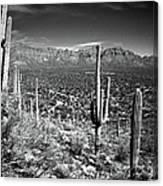 Arizona, Tucson, Saguaro Np, Brown Canvas Print
