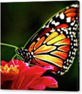 Artistic Monarch Canvas Print