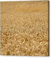 A Field Of Wheat Canvas Print