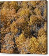 Aspen Autumn Leaves Canvas Print