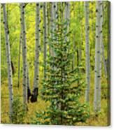 Aspen Christmas Tree Canvas Print