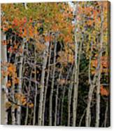 Autumn As The Seasons Change Canvas Print
