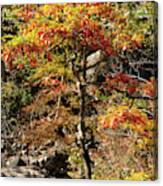 Autumn Color In Smoky Mountains National Park Canvas Print