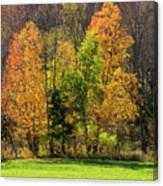 Autumn Colour In Southern Ontario Canvas Print