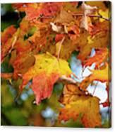 Autumn Colour Canvas Print