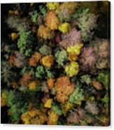 Autumn Forest - Aerial Photography Canvas Print