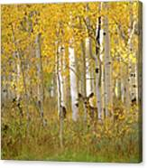 Autumn In Uinta National Forest. A Deer Canvas Print