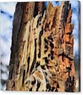 Autumn Knotty Tree Sculpture Canvas Print