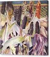 Autumn Maize Canvas Print