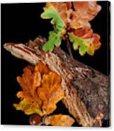 Autumn Oak Leaves And Acorns On Black Canvas Print