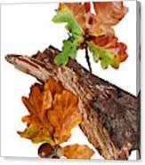 Autumn Oak Leaves And Acorns On White Canvas Print