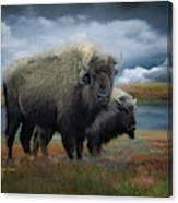 Autumn Plains Bison Canvas Print