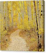 Autumn Road Canvas Print