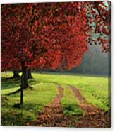 Autumn Trees In Garden Canvas Print