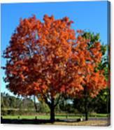 Autumnal Beauty Canvas Print
