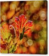 Autumn's Glow 2 Canvas Print