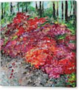Azaleas National Arboretum 201836 Canvas Print
