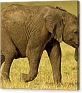 Baby Elephant Following The Herd On The Canvas Print