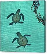 Baby Sea Turtles Canvas Print