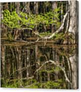 Bald Cypress Trees And Reflection, Six Canvas Print