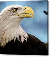 Bald Eagle And Fledgling  Canvas Print