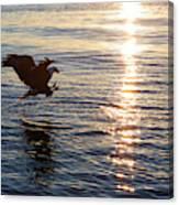 Bald Eagle At Sunset Canvas Print