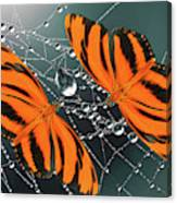 Banded Orange Butterfly. Canvas Print
